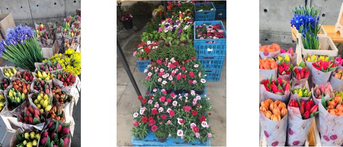 Květiny od Týny